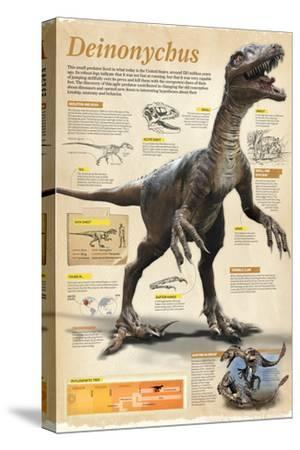 Infographic of the Deinonychus, a Theropod Dinosaur That Lived During the Early Cretaceous Period--Stretched Canvas Print