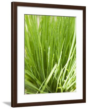 Fresh Chives in the Open Air--Framed Photographic Print