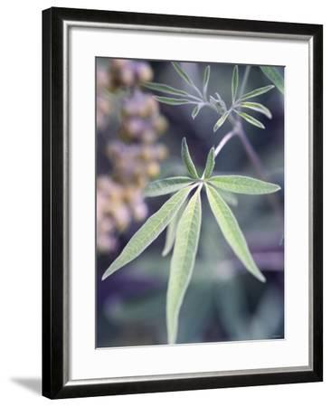 Wild Growing Hemp-Brigitte Sporrer-Framed Photographic Print