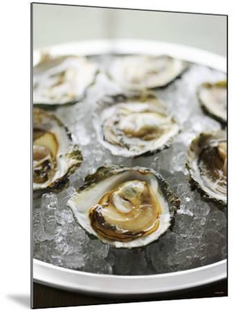 Oysters on Ice-Matilda Lindeblad-Mounted Photographic Print