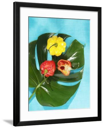 Red and Yellow Habanero Chillies-Armin Zogbaum-Framed Photographic Print