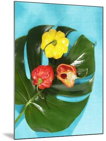 Red and Yellow Habanero Chillies-Armin Zogbaum-Mounted Photographic Print