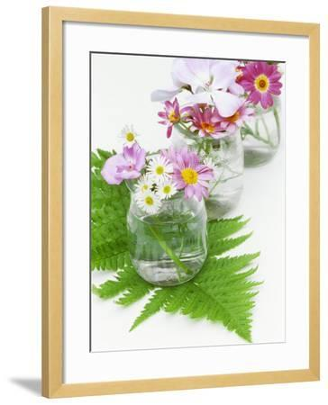 Geraniums and Chrysanthemums in Jars with Fern-Linda Burgess-Framed Photographic Print