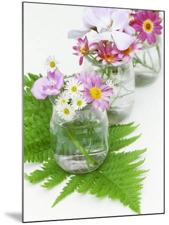 Geraniums and Chrysanthemums in Jars with Fern-Linda Burgess-Mounted Photographic Print