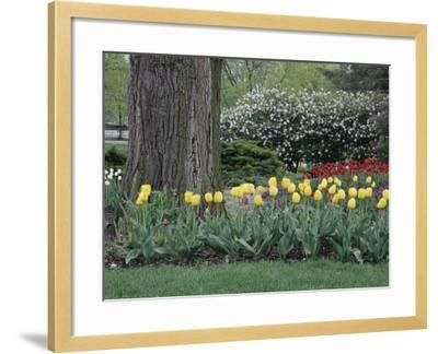 Franklin Park, Columbus, Ohio, USA--Framed Photographic Print