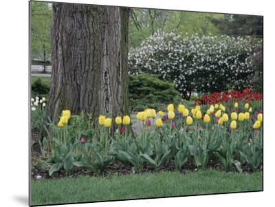 Franklin Park, Columbus, Ohio, USA--Mounted Photographic Print