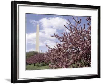Washington Monument, Washington, D.C., USA--Framed Photographic Print
