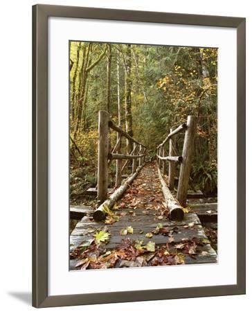 Olympic National Park, Washington, USA--Framed Photographic Print