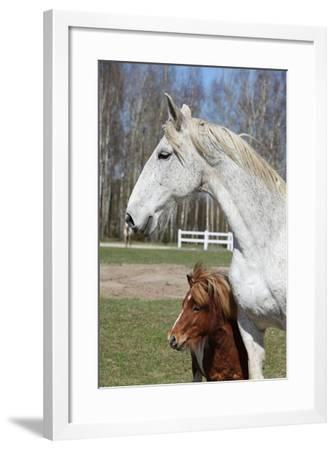 Big Horse with Pony Friend-Zuzule-Framed Photographic Print