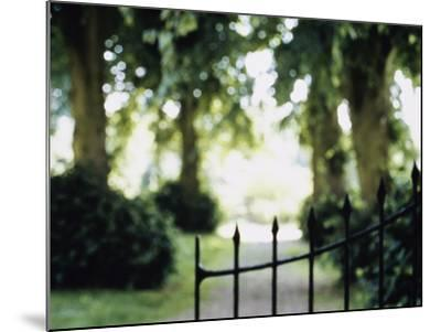 Blurred Image of a Gate and Woodland Path--Mounted Photographic Print