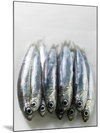 Several Fresh Anchovies--Mounted Photographic Print