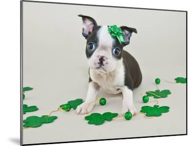 St Patrick's Day Puppy-jstaley4011-Mounted Photographic Print