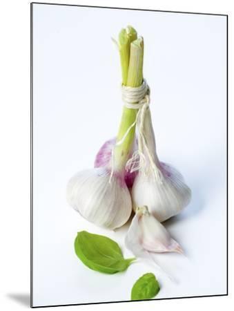 Fresh Green Garlic-Ira Leoni-Mounted Photographic Print