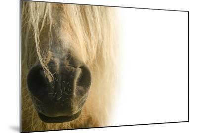 White Pony. Nose Pony on White Background- swevil-Mounted Photographic Print