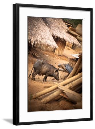 Pig in a Village-EvanTravels-Framed Photographic Print
