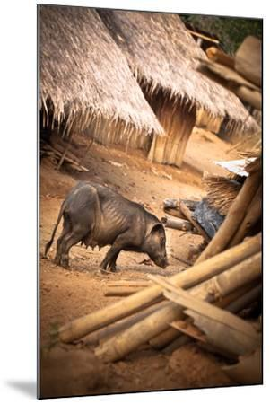 Pig in a Village-EvanTravels-Mounted Photographic Print
