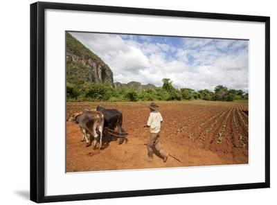 The Farmer in Vinales Valley, Cuba-Hakki Ceylan-Framed Photographic Print