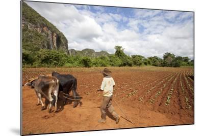 The Farmer in Vinales Valley, Cuba-Hakki Ceylan-Mounted Photographic Print