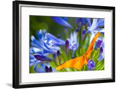 Julia Heliconian in Purple-EvanTravels-Framed Photographic Print