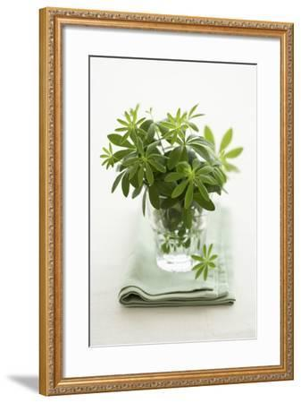 Woodruff in a Glass of Water-Marc O^ Finley-Framed Photographic Print