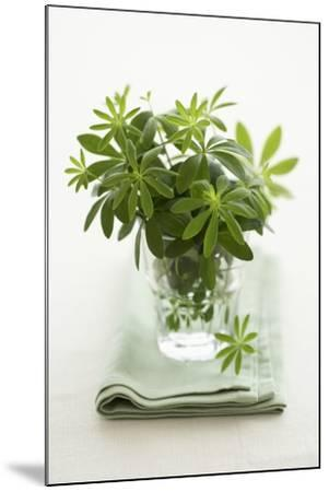 Woodruff in a Glass of Water-Marc O^ Finley-Mounted Photographic Print