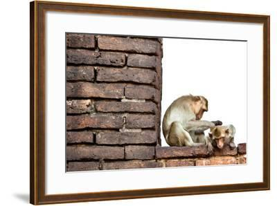 Bear-Faced Monkeys in Lopburi, Thailand-EvanTravels-Framed Photographic Print