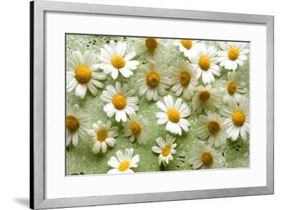 Daisies-Walter Cimbal-Framed Photographic Print
