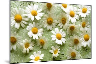 Daisies-Walter Cimbal-Mounted Photographic Print