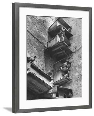 Boxes for Pigeons-Luciano Ferri-Framed Photographic Print