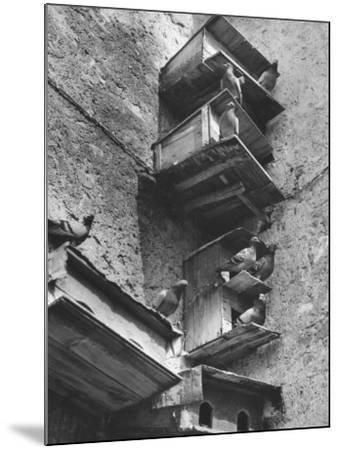 Boxes for Pigeons-Luciano Ferri-Mounted Photographic Print