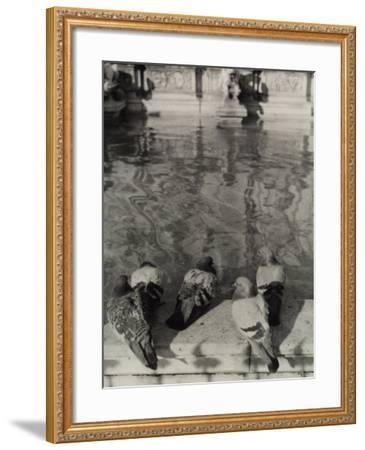 Pigeons on the Edge of the Gaia Fountain in Siena-Vincenzo Balocchi-Framed Photographic Print