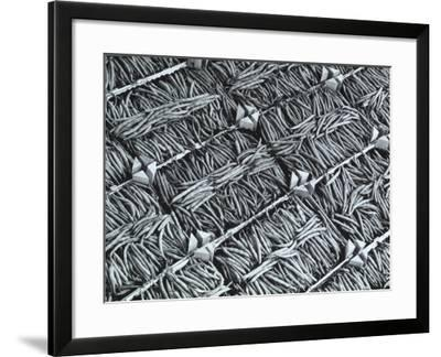 Wooden Crates Containing Green Beans-A^ Villani-Framed Photographic Print
