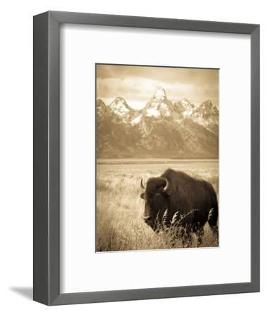 Bison in Grand Teton National Park Wyoming-Justin Bailie-Framed Photographic Print