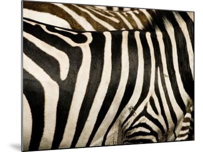A Pattern of Stripes on a Burchell's Zebra.  Kenya.-Karine Aigner-Mounted Photographic Print