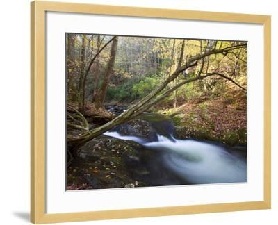 The Little River, Great Smoky Mountains National Park, Tn-Ian Shive-Framed Photographic Print