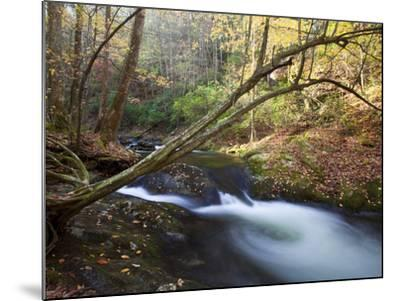 The Little River, Great Smoky Mountains National Park, Tn-Ian Shive-Mounted Photographic Print