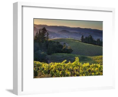 Healdsburg, Sonoma County, California: Vineyard and Winery at Sunset-Ian Shive-Framed Photographic Print