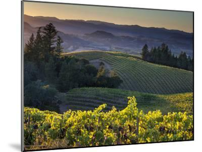 Healdsburg, Sonoma County, California: Vineyard and Winery at Sunset-Ian Shive-Mounted Photographic Print