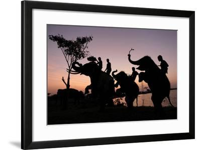 Silhouette of Thai Mahouts and Elephants with One on the Left Holding Krathong-Rungroj Yongrit-Framed Photographic Print
