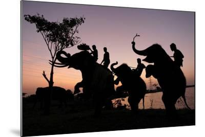 Silhouette of Thai Mahouts and Elephants with One on the Left Holding Krathong-Rungroj Yongrit-Mounted Photographic Print