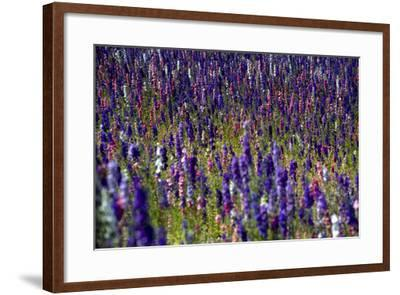 Flowers at a Farm in the Willamette Valley of Oregon-Bennett Barthelemy-Framed Photographic Print