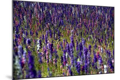 Flowers at a Farm in the Willamette Valley of Oregon-Bennett Barthelemy-Mounted Photographic Print