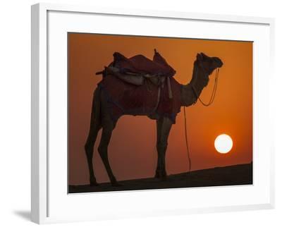 Camel Silhouetted Against the Setting Sun in the Thar Desert Near Jaisalmer, India-Frances Gallogly-Framed Photographic Print