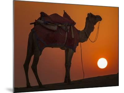 Camel Silhouetted Against the Setting Sun in the Thar Desert Near Jaisalmer, India-Frances Gallogly-Mounted Photographic Print
