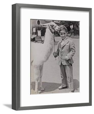 Baby at the Zoo with a Llama-Luigi Leoni-Framed Photographic Print