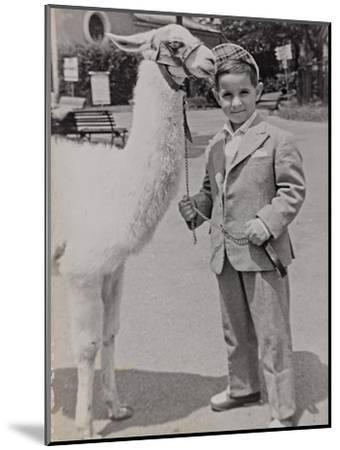 Baby at the Zoo with a Llama-Luigi Leoni-Mounted Photographic Print