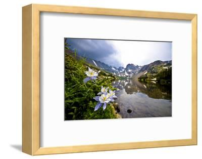 Colorado Columbines Blooming in Early July with Spring Run Off, Indian Peaks Rocky Mountains-Daniel Gambino-Framed Photographic Print