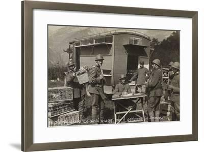 Distribution of Pigeons Among the Soldiers for Service in the Trenches During the First World War--Framed Photographic Print