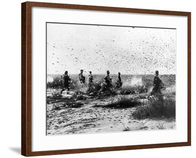 Morocco: Locusts, 1954--Framed Photographic Print