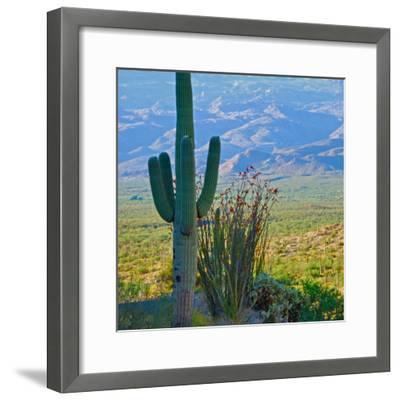 Saguaro Cactus in Saguaro National Park, Arizona,USA-Anna Miller-Framed Photographic Print